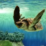 癒しであふれるウォーターワールド。新潟県の水族館まとめ