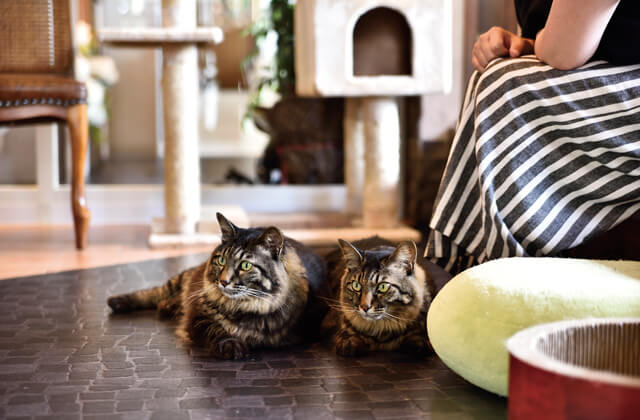 猫Cafeぷりむろーずのネコ