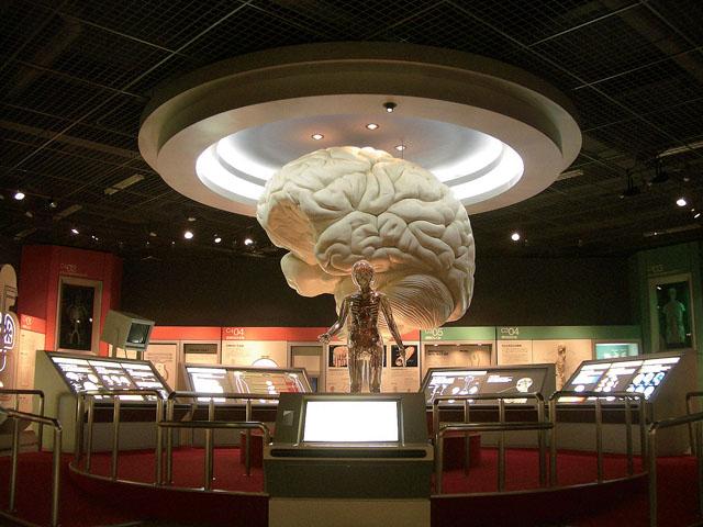 上越科学館-脳2_メイン