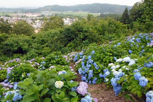 水道山・観音山公園