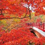 【2019年】名所から穴場まで!新潟&近県 絶景紅葉スポットと見ごろ61選