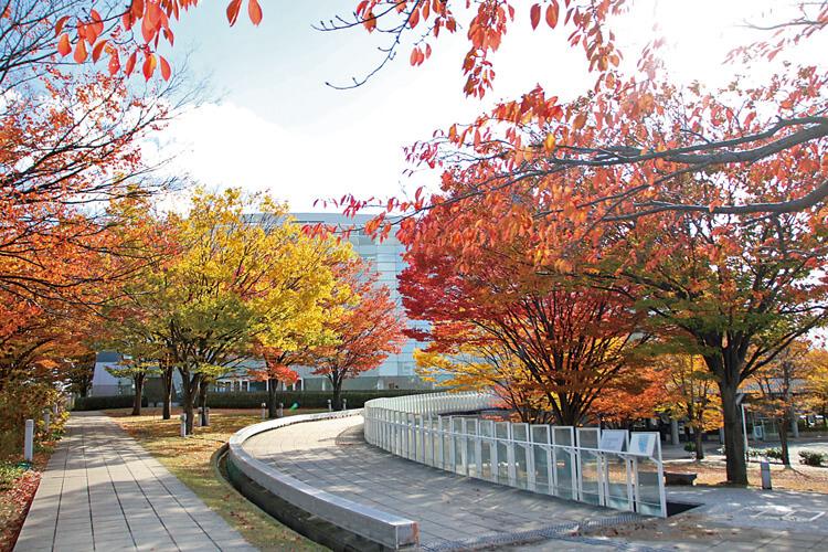 白山公園紅葉