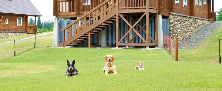愛犬と一緒に楽しめる♪新潟・近県おでかけスポット&レジャー10選