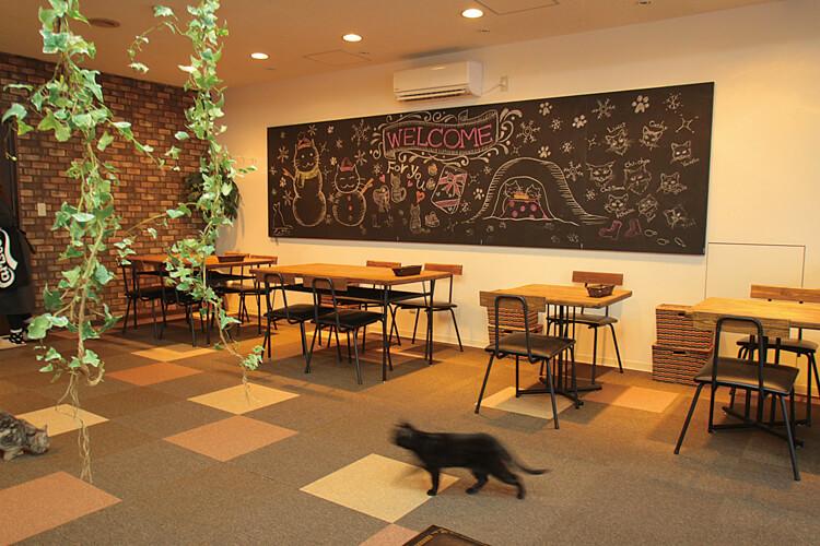 ねこカフェ & 猫酒場 らて
