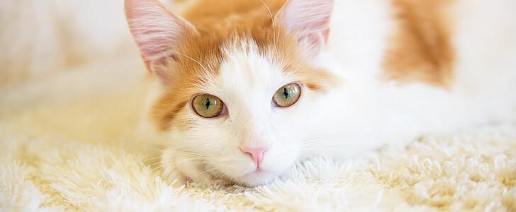 かわいいニャンコがお出迎え♪新潟県内の猫カフェまとめ