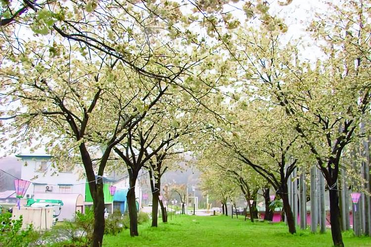 黄桜の丘公園750500
