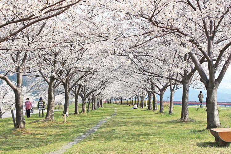 姫川桜づつみ750500