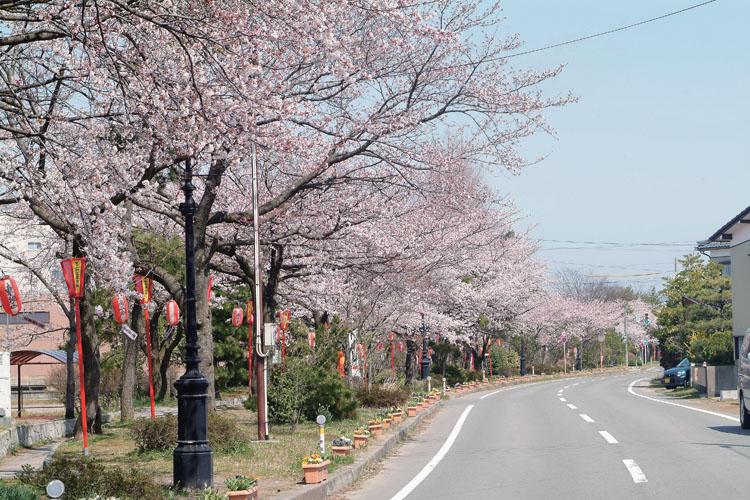 ガス燈の桜並木750500