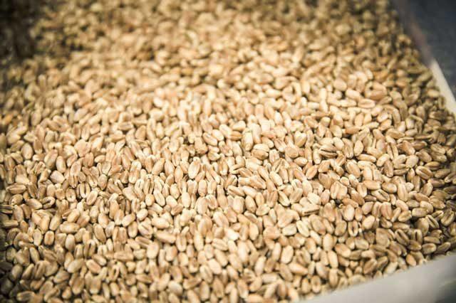 つやつやの小麦はちょっといい香り