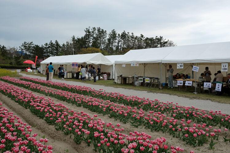 紫雲寺記念公園 春祭り750500