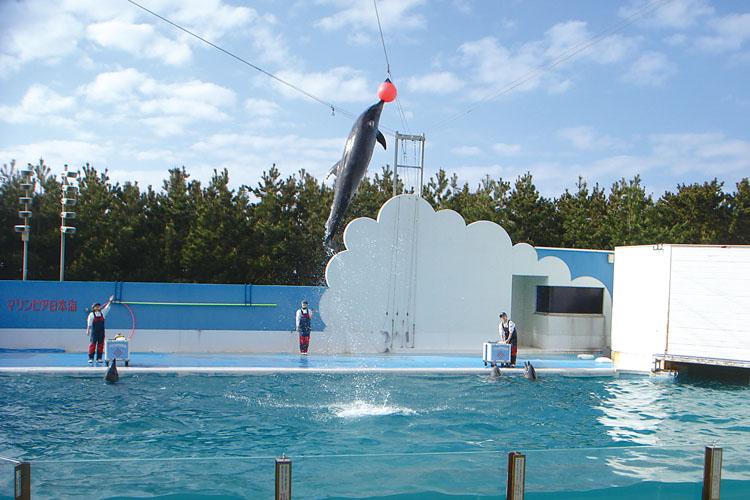 マリンピア日本海-イルカジャンプ750500