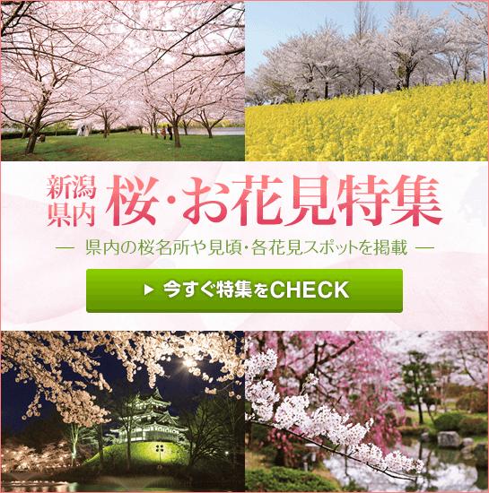 お花見こまち 新潟県内の桜・お花見特集