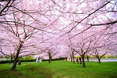 白山公園 空中庭園