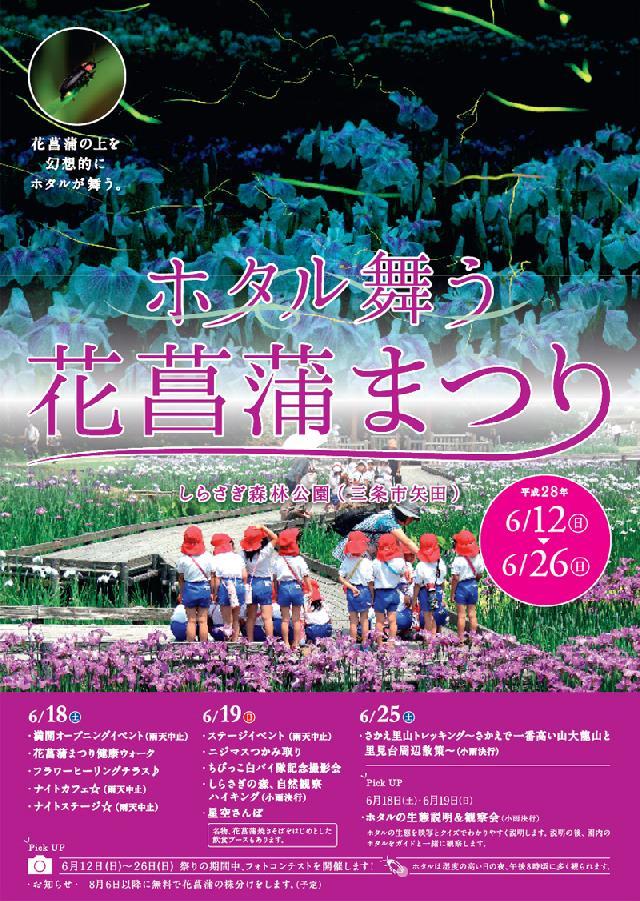 三条の夜にホタル舞う。しらさぎ森林公園で「花しょうぶ祭り」開催