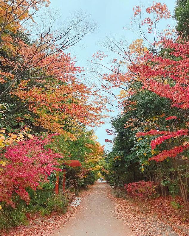 今日の鳥屋野潟公園(女池地区)の様子。紅葉が綺麗です♪