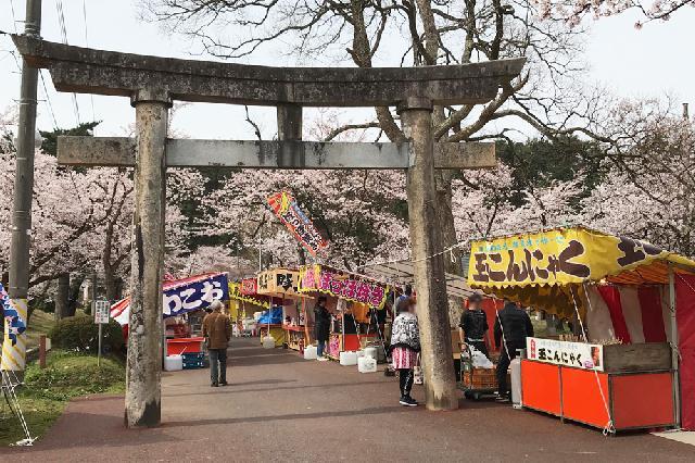村松公園の桜が見頃!子ども連れのお花見にぴったり♪きれいでした〜
