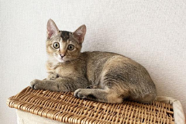 新潟初! ネコのあらゆる診療科に対応するネコの専門病院が南万代に