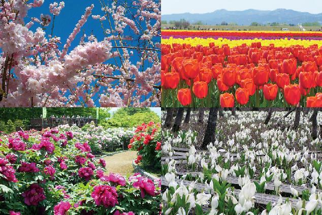 花、美味、温泉…。春の魅力がギュッと凝縮「五泉巡り」のススメ
