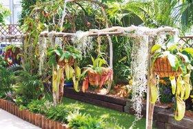 観賞温室の企画展「食虫植物展 もっと知りたい! 植物の技」