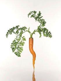 上杉敬写真展「FORM」—形をテーマにした植物視—