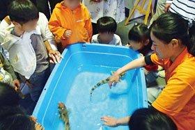 動物ふれあい教室 サメにどきどきタッチ