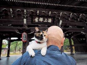 岩合光昭写真展 ねこの京都
