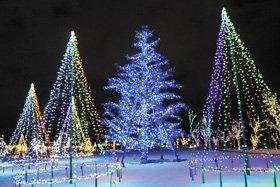 GROWING ILLUMINATION 2018-19 Winter 〜Light Forest 光の森〜