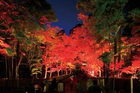 松雲山荘ライトアップ