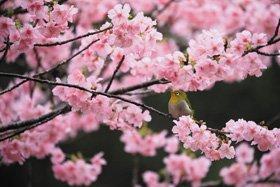 米 美知子 新春写真展 日本の美彩2019