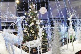 観賞温室の企画展「クリスマス展」