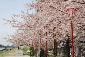 にいがた春咲きフェスタ