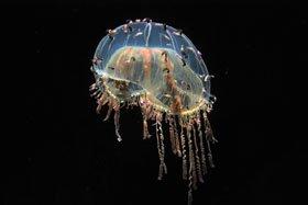 企画展示「身近に潜む海のキケン生物」