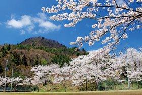 <花見スポット> 丸小山公園