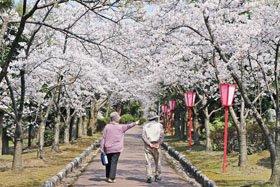 <花見スポット> 美山公園