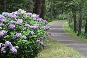 <花スポット>新潟県立大潟水と森公園