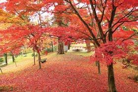 <紅葉スポット>村松公園