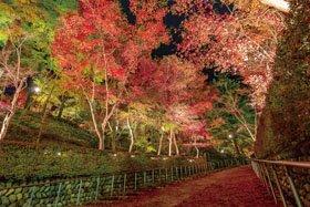 <紅葉スポット>松雲山荘(※ライトアップあり)