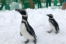 【2/21(日)に延期】国営越後丘陵公園 ペンギンが公園にやってくる!