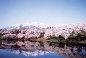 <花スポット・桜>松ヶ峯周辺の桜