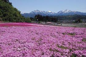 魚沼芝桜まつり
