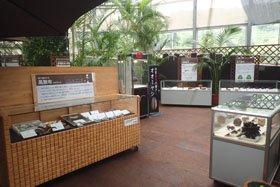 新潟県立植物園 企画展示「タネといろいろな豆」
