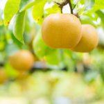 ぶどう狩り 梨狩り きのこ狩り…新潟の秋はおいしい味覚がいっぱい!秋の味覚狩りスポットまとめ