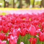 春から初夏の花めぐり!新潟のおすすめ花スポット25選