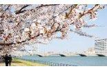新潟市のおすすめ桜スポット開花情報&イベント