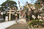 白山公園の梅の花、咲いています!土筆も発見♪