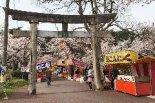 村松公園の桜が見頃!子ども連れの ...