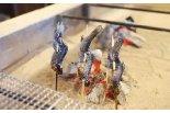 いろり焼きと県産食材の郷土料理「にいがた方舟」が長岡 ...